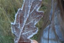 Escarcha, rocio congelado a bajas temperaturas sobre la hoja.